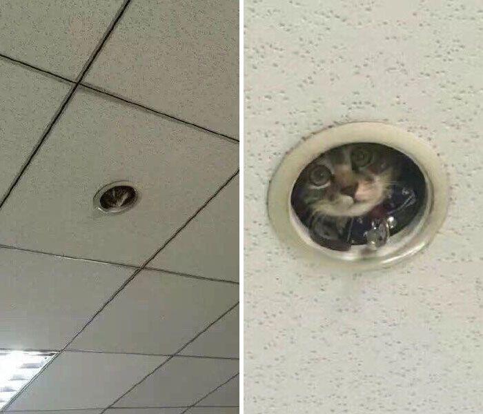 40 fotos de gatos em lugares que eles não deveriam estar 6