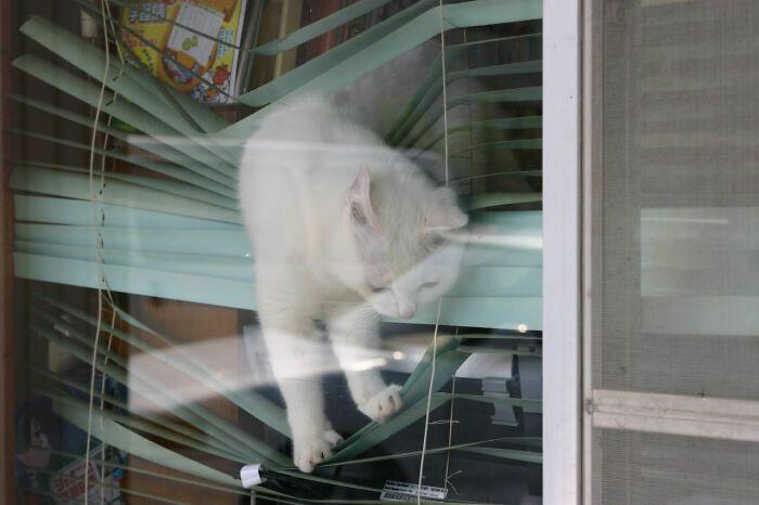40 fotos de gatos em lugares que eles não deveriam estar 9