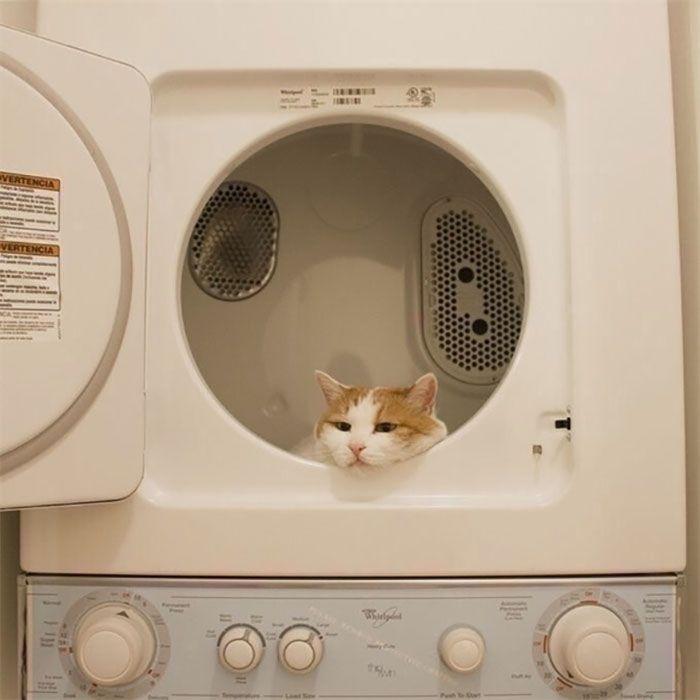 40 fotos de gatos em lugares que eles não deveriam estar 17
