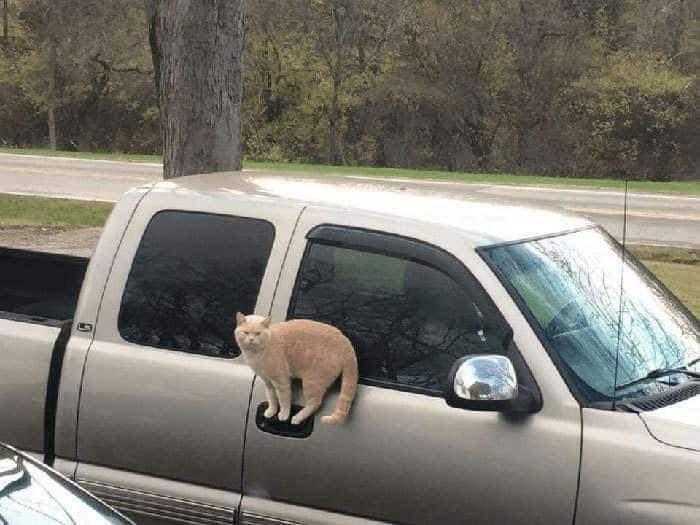 40 fotos de gatos em lugares que eles não deveriam estar 18