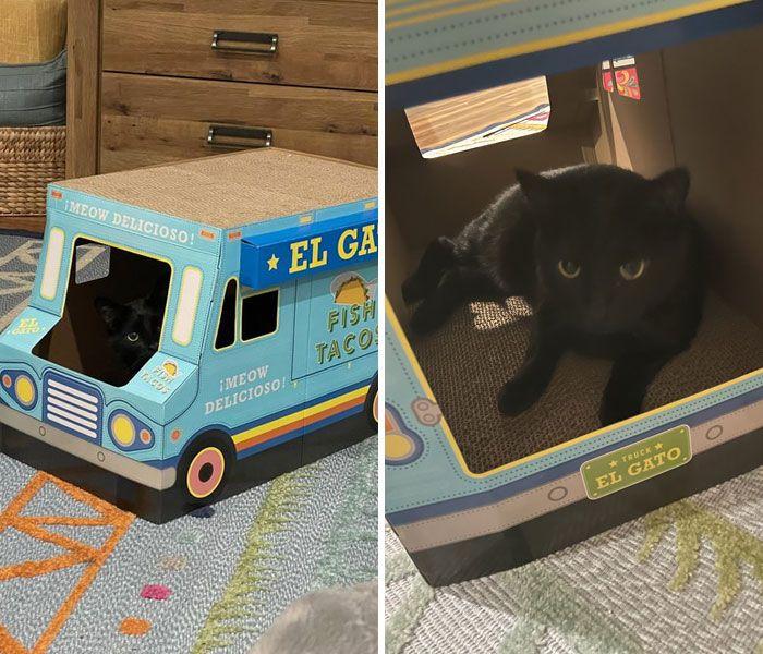 40 fotos de gatos em lugares que eles não deveriam estar 19