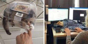 40 fotos de gatos em lugares que eles não deveriam estar 26