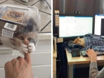 40 fotos de gatos em lugares que eles não deveriam estar 45