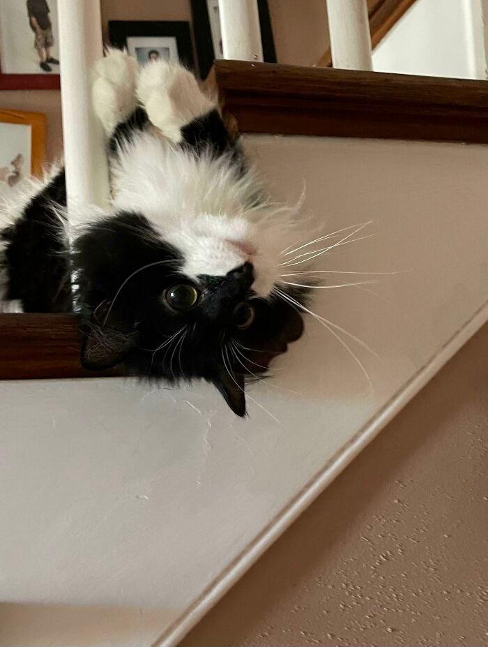 38 fotos engraçadas de gatos com defeito 5