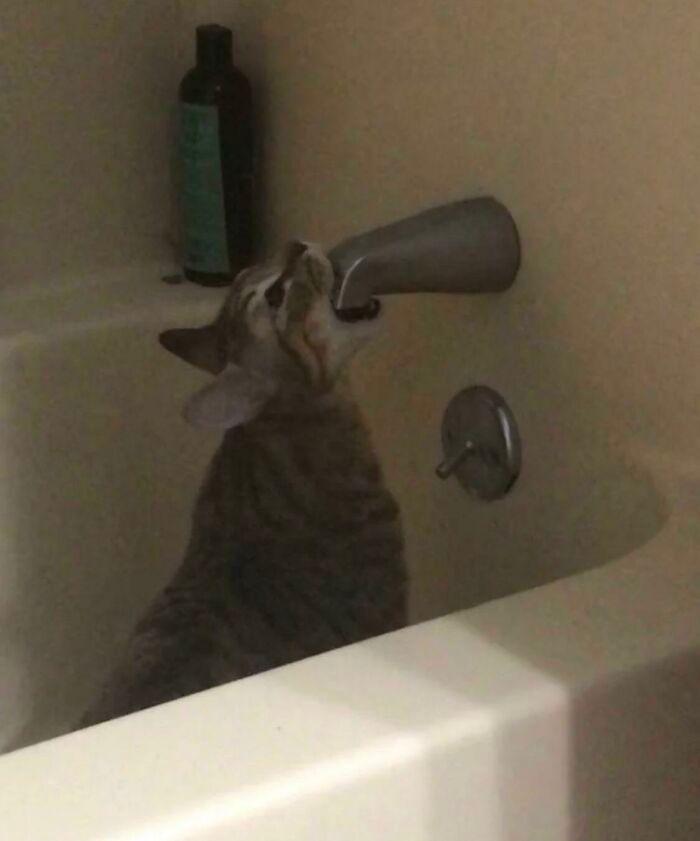 38 fotos engraçadas de gatos com defeito 10