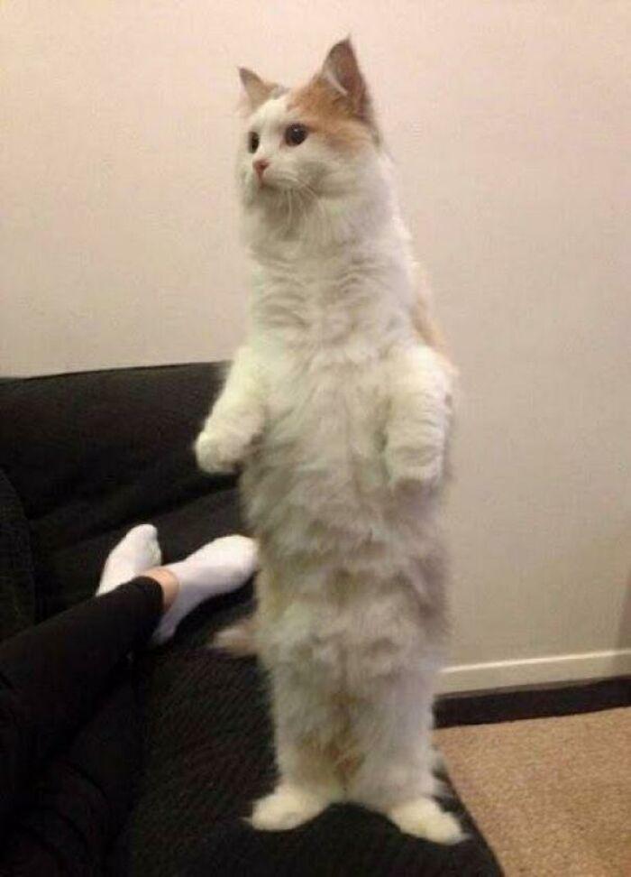 38 fotos engraçadas de gatos com defeito 18