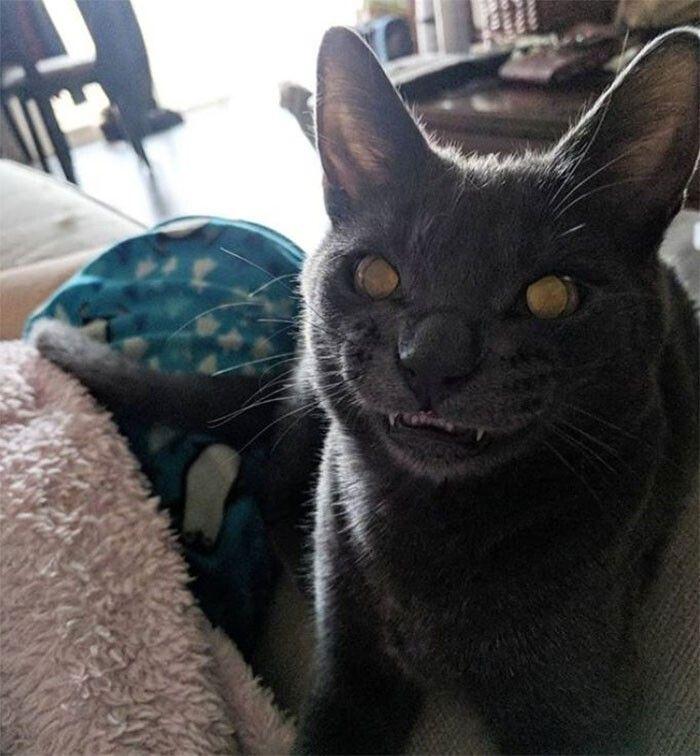 38 fotos engraçadas de gatos com defeito 20