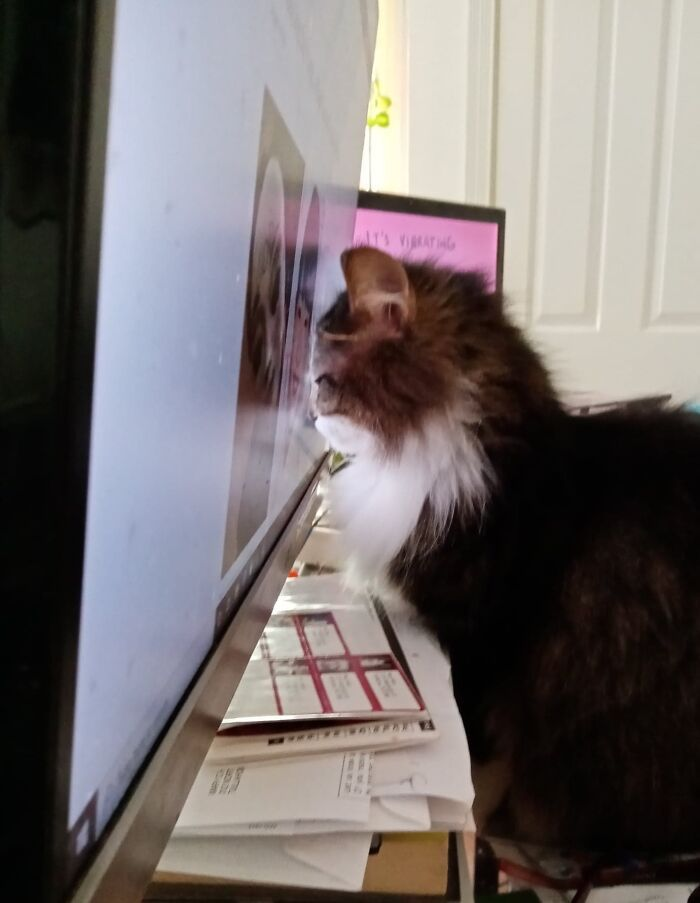 38 fotos engraçadas de gatos com defeito 24