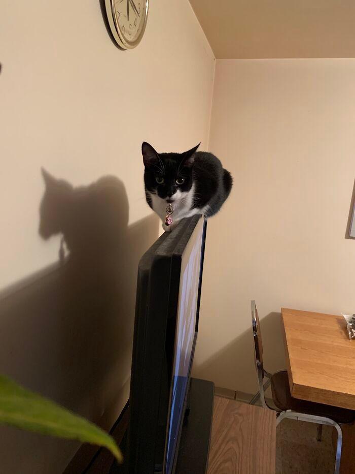 38 fotos engraçadas de gatos com defeito 30