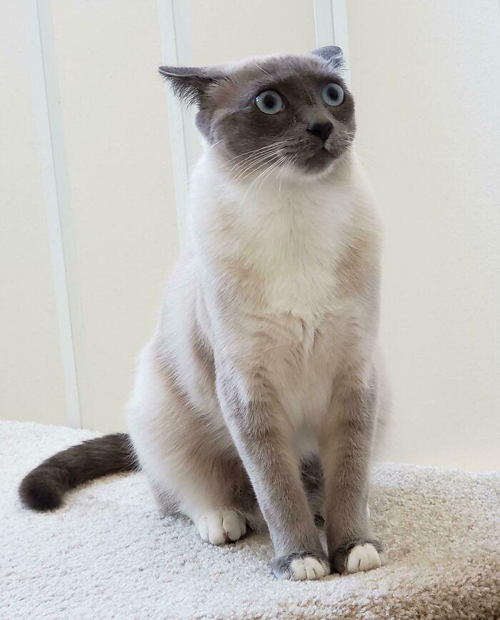 38 fotos engraçadas de gatos com defeito 34