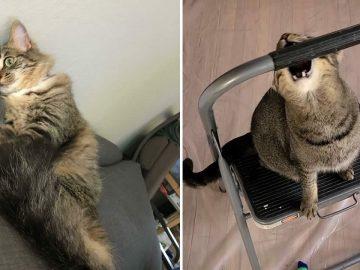38 fotos engraçadas de gatos com defeito 12