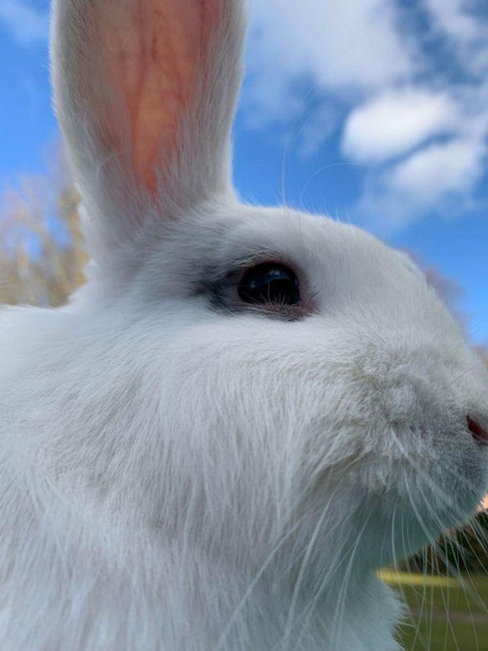 21 animais com características ou comportamentos que vai deixar você de boca aberta 20