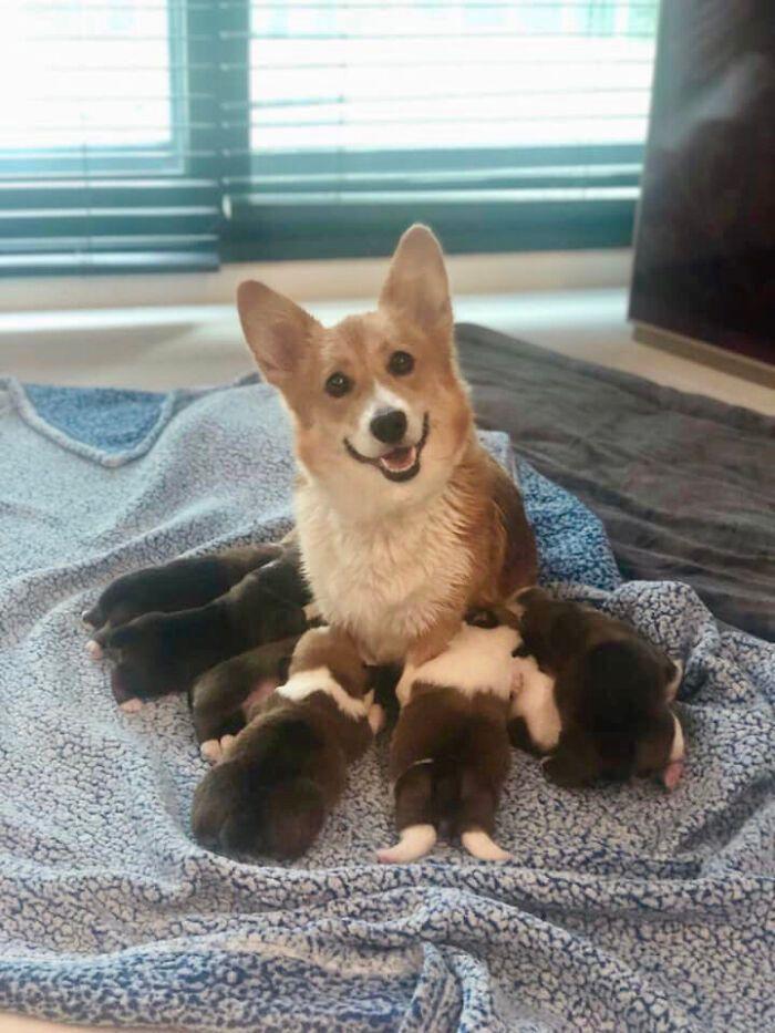44 cachorros orgulhosos com seus filhotes 4