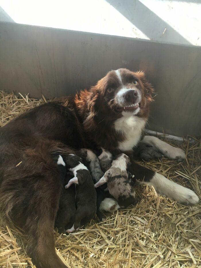 44 cachorros orgulhosos com seus filhotes 10