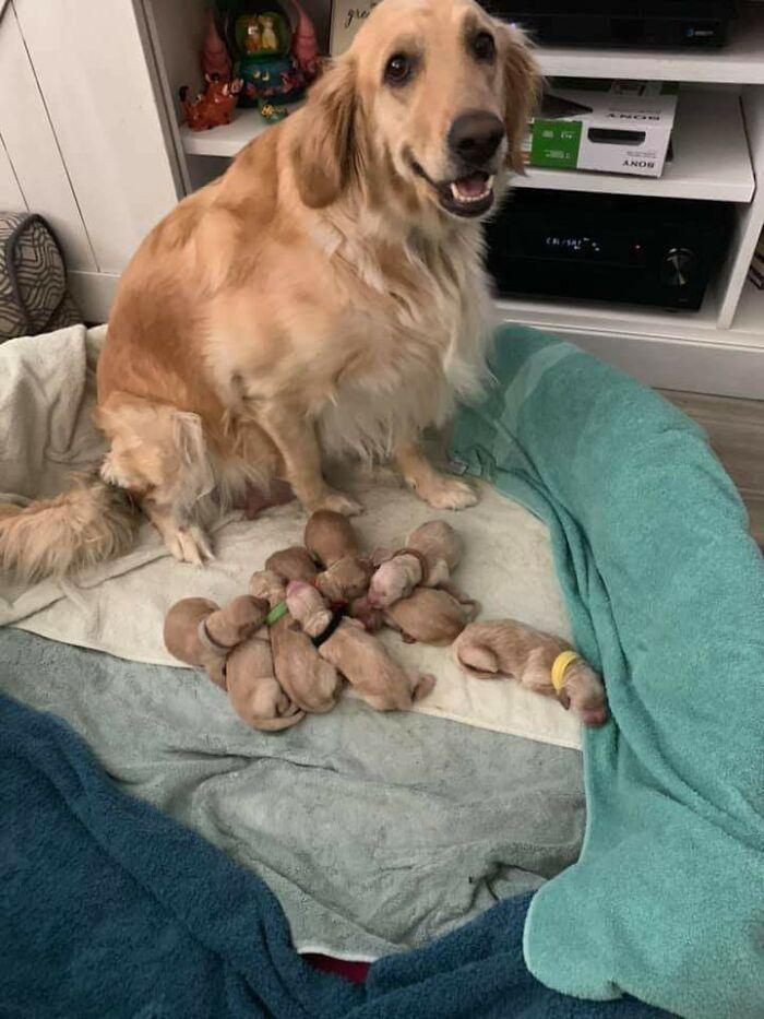 44 cachorros orgulhosos com seus filhotes 16