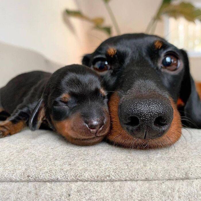 44 cachorros orgulhosos com seus filhotes 19