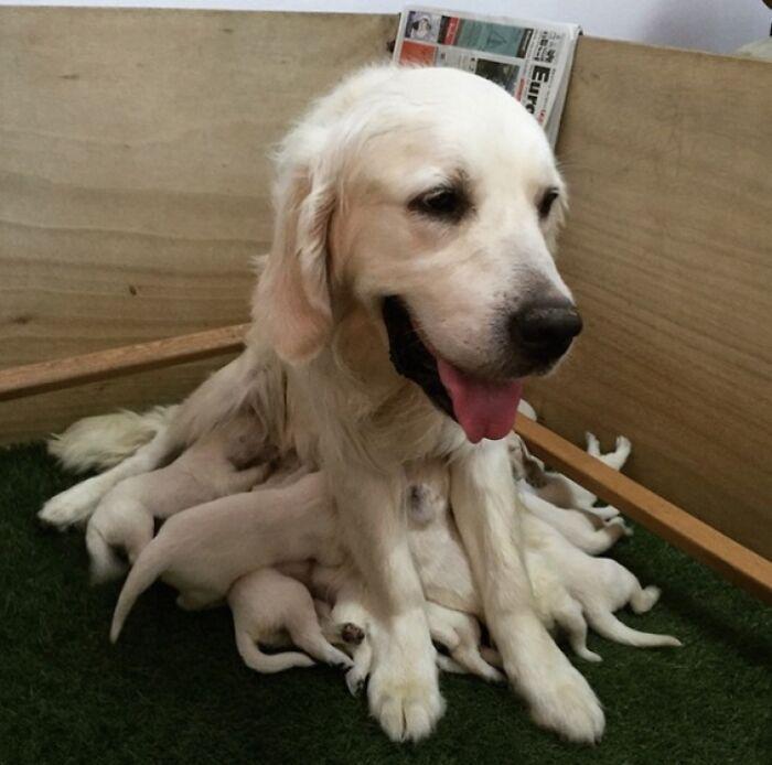 44 cachorros orgulhosos com seus filhotes 23