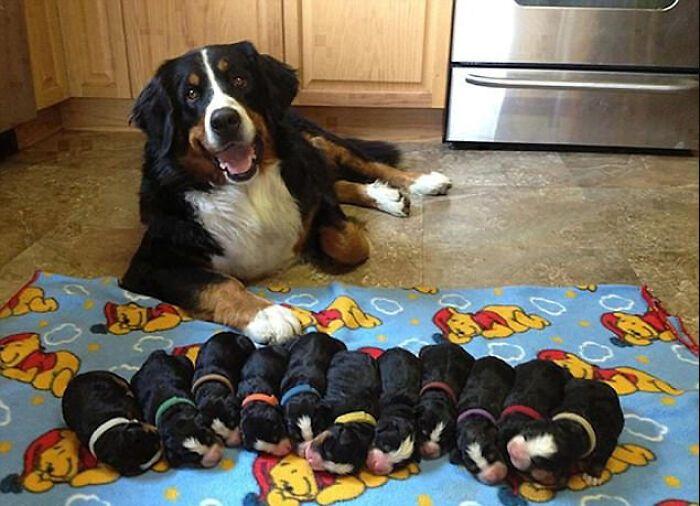 44 cachorros orgulhosos com seus filhotes 29