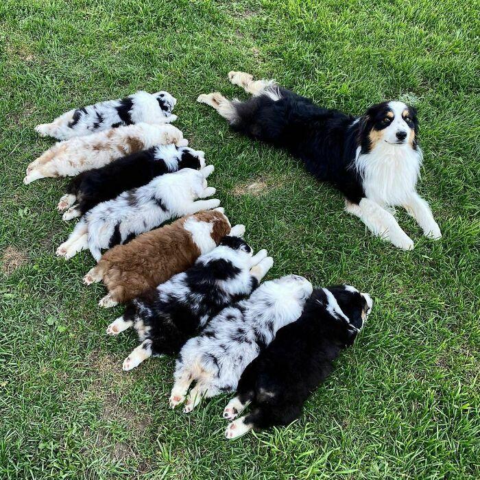 44 cachorros orgulhosos com seus filhotes 30
