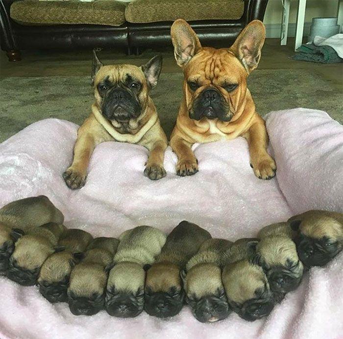 44 cachorros orgulhosos com seus filhotes 31