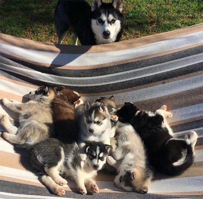 44 cachorros orgulhosos com seus filhotes 32