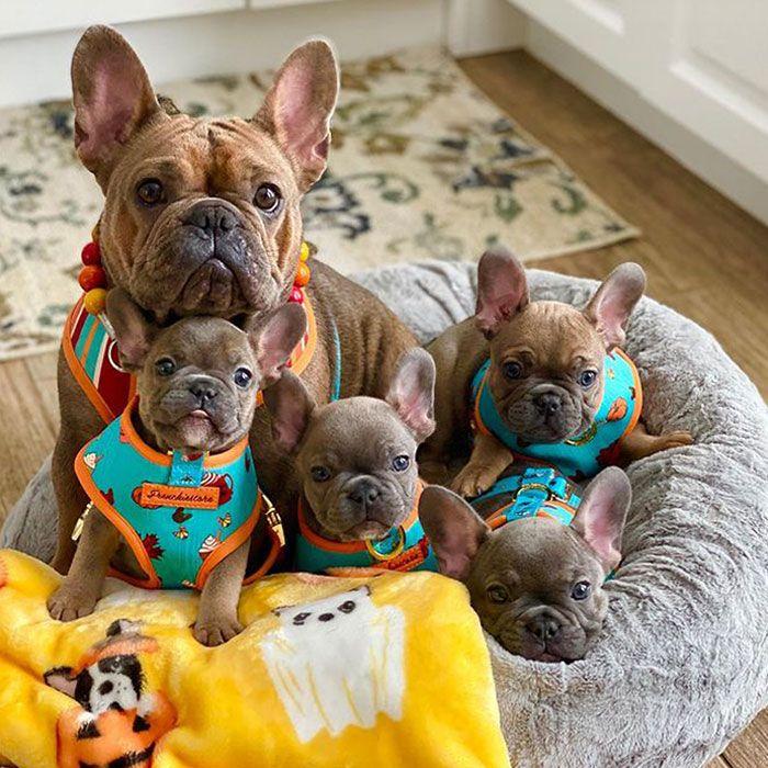 44 cachorros orgulhosos com seus filhotes 36
