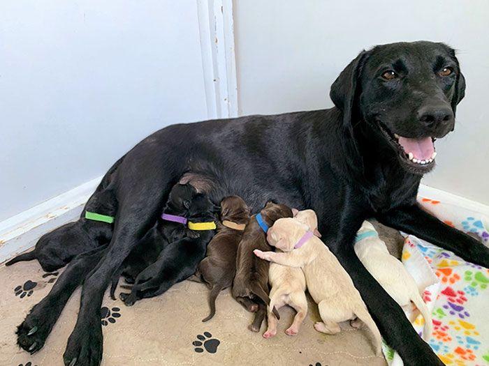 44 cachorros orgulhosos com seus filhotes 39
