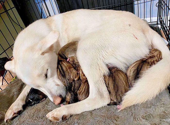 44 cachorros orgulhosos com seus filhotes 40