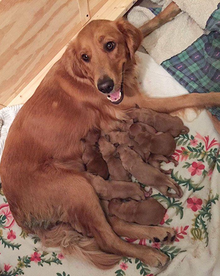 44 cachorros orgulhosos com seus filhotes 43