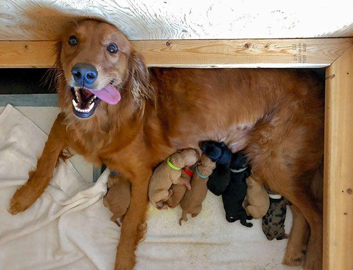 44 cachorros orgulhosos com seus filhotes 44