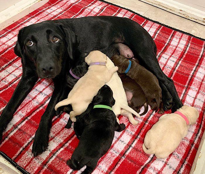 44 cachorros orgulhosos com seus filhotes 45
