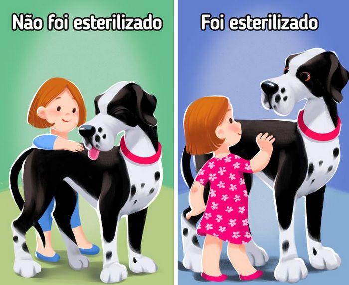 9 curiosidades sobre castração de cachorros e gatos 7