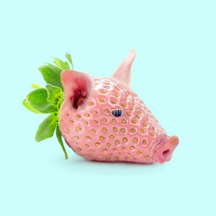 Esta agência de design transforma animais, plantas e outras coisas em imagens surreais usando o Photoshop (48 fotos) 8
