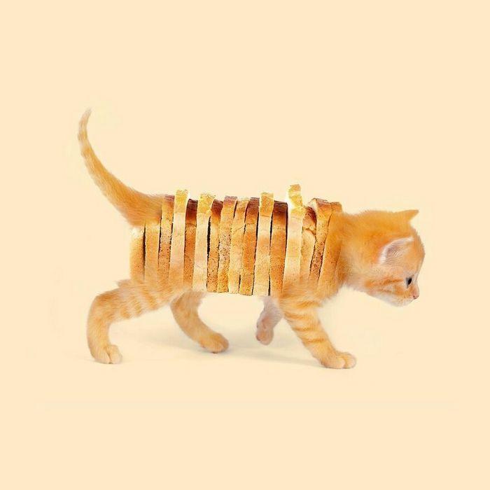 Esta agência de design transforma animais, plantas e outras coisas em imagens surreais usando o Photoshop (48 fotos) 10