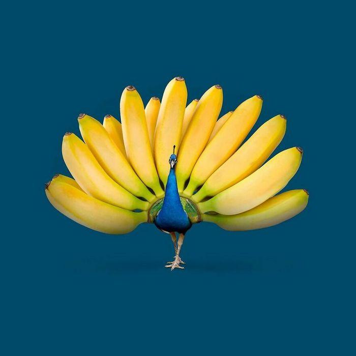 Esta agência de design transforma animais, plantas e outras coisas em imagens surreais usando o Photoshop (48 fotos) 11
