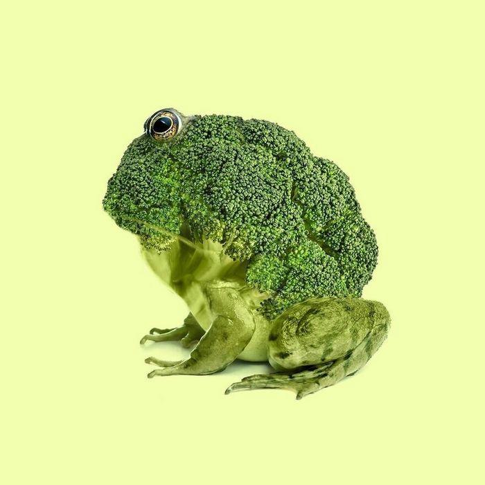 Esta agência de design transforma animais, plantas e outras coisas em imagens surreais usando o Photoshop (48 fotos) 19