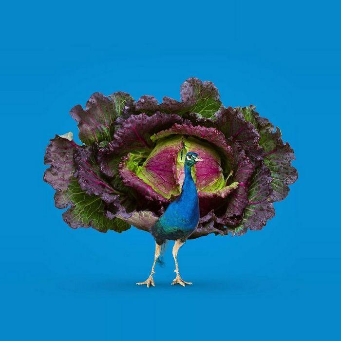 Esta agência de design transforma animais, plantas e outras coisas em imagens surreais usando o Photoshop (48 fotos) 22
