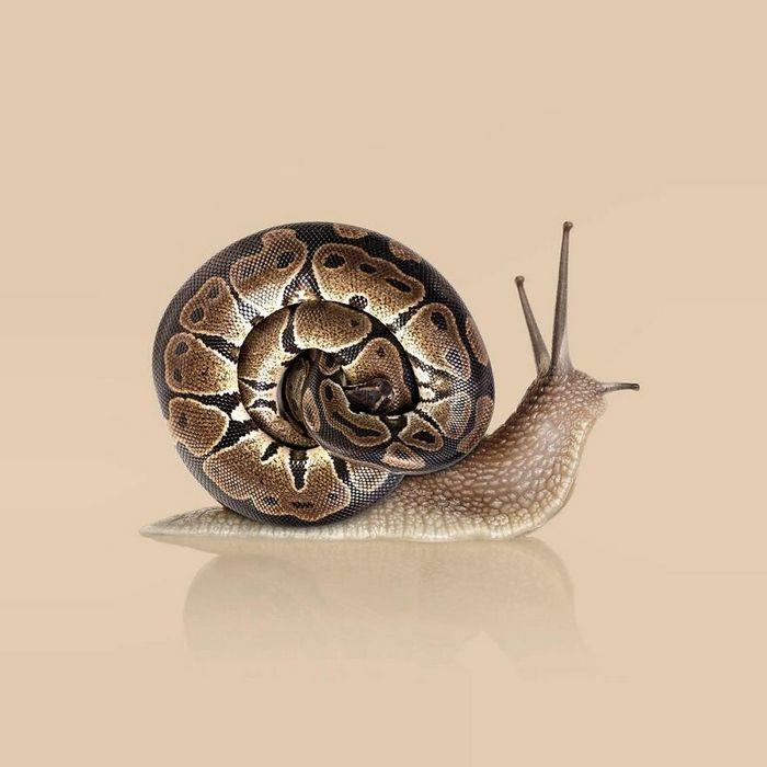 Esta agência de design transforma animais, plantas e outras coisas em imagens surreais usando o Photoshop (48 fotos) 25