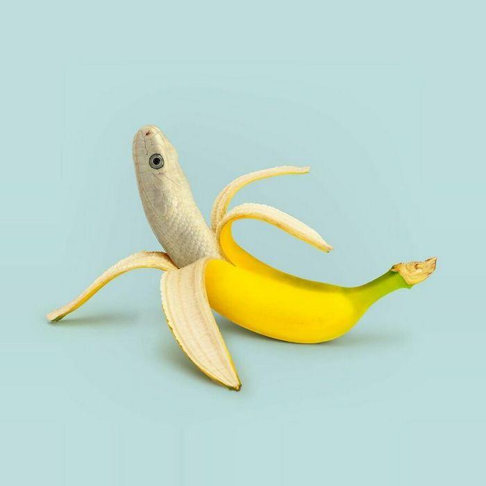 Esta agência de design transforma animais, plantas e outras coisas em imagens surreais usando o Photoshop (48 fotos) 29