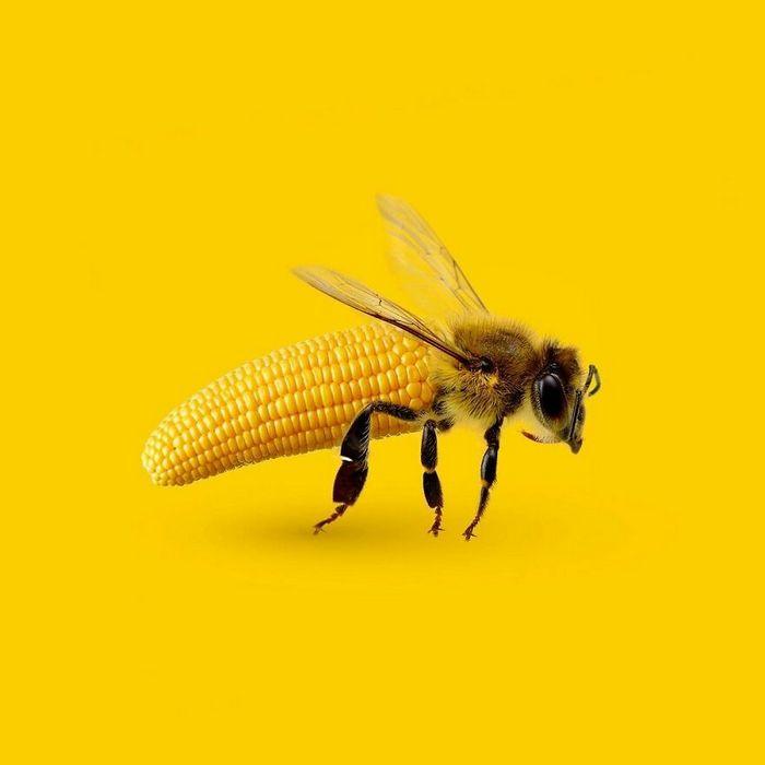 Esta agência de design transforma animais, plantas e outras coisas em imagens surreais usando o Photoshop (48 fotos) 34