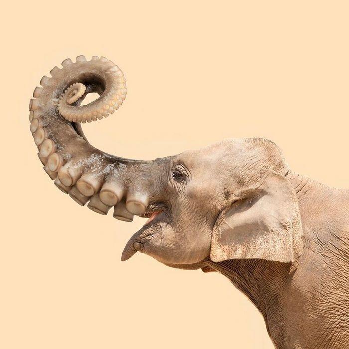Esta agência de design transforma animais, plantas e outras coisas em imagens surreais usando o Photoshop (48 fotos) 37