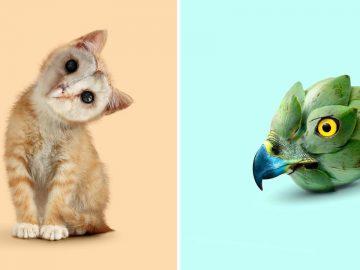 Esta agência de design transforma animais, plantas e outras coisas em imagens surreais usando o Photoshop (48 fotos) 4