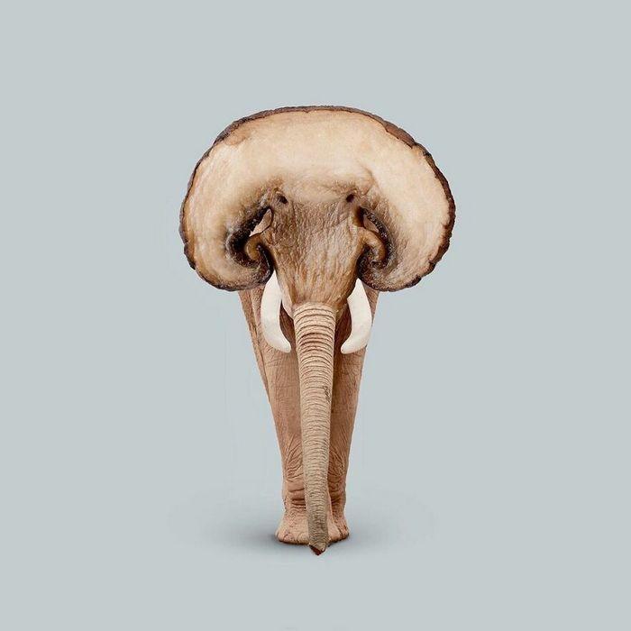 Esta agência de design transforma animais, plantas e outras coisas em imagens surreais usando o Photoshop (48 fotos) 39