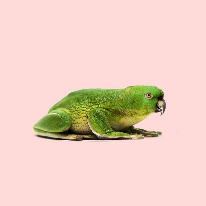 Esta agência de design transforma animais, plantas e outras coisas em imagens surreais usando o Photoshop (48 fotos) 46