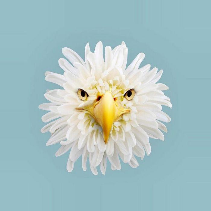 Esta agência de design transforma animais, plantas e outras coisas em imagens surreais usando o Photoshop (48 fotos) 47