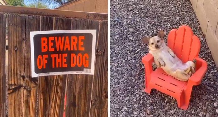 57 fotos hilárias de cachorro para colocar um sorriso em seu rosto 3