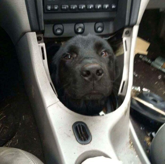 57 fotos hilárias de cachorro para colocar um sorriso em seu rosto 26