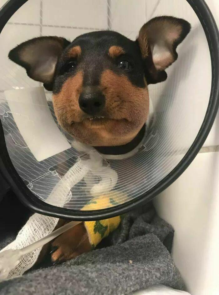 57 fotos hilárias de cachorro para colocar um sorriso em seu rosto 28