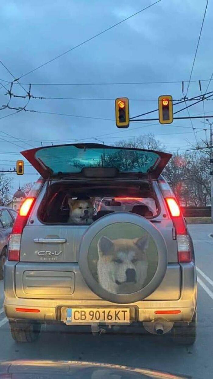 57 fotos hilárias de cachorro para colocar um sorriso em seu rosto 35