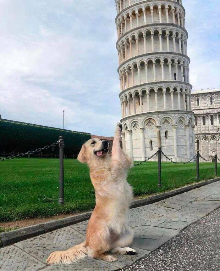 57 fotos hilárias de cachorro para colocar um sorriso em seu rosto 43
